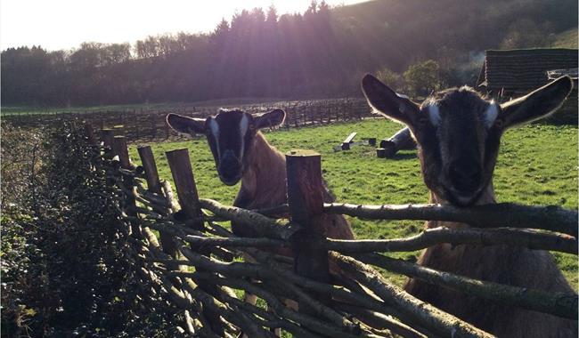 Butser Ancient Farm