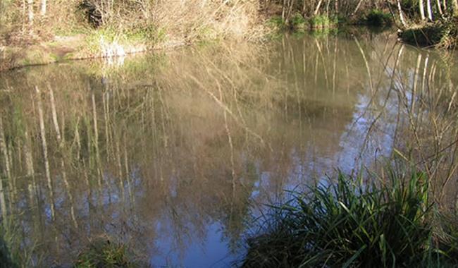 Horam Manor Farm Fishery