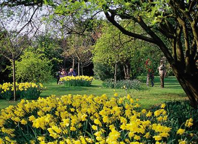 Highdown Gardens Worthing - spring flowers
