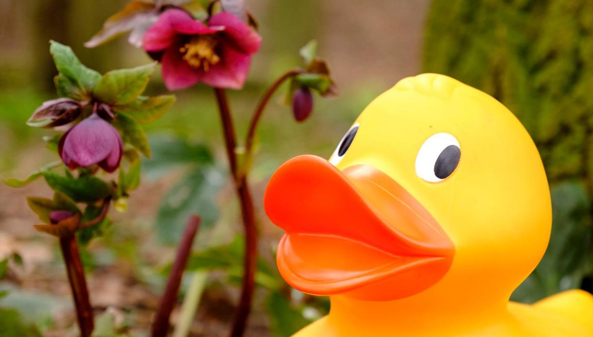 Giant Easter Duck Trail