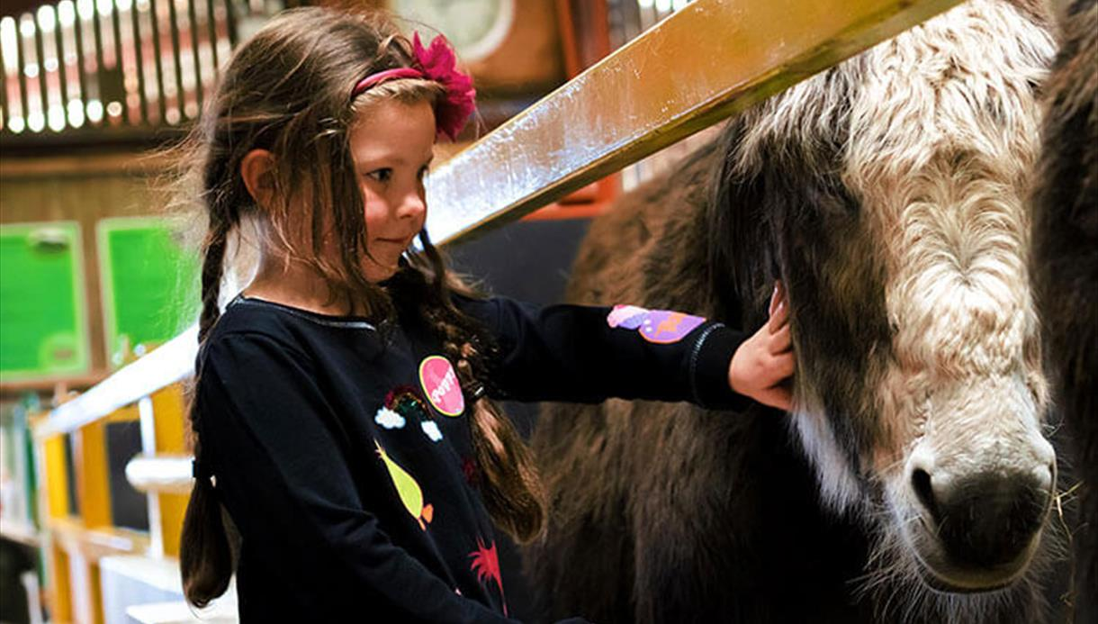 A child stroking a donkey at Farmer Teds.