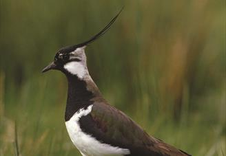 Lapwing Cycle Route