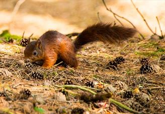 Formby Red Squirrel Reserve