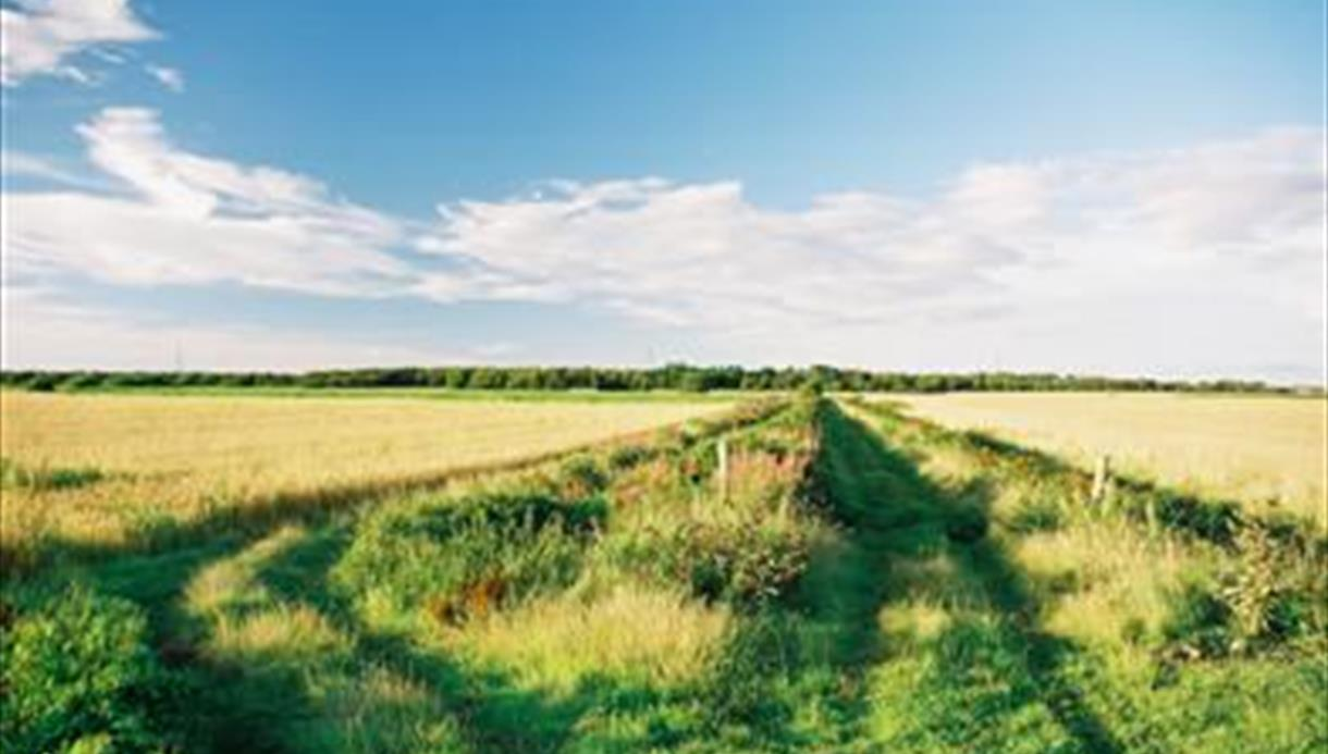 Near Cheshire Lines Path
