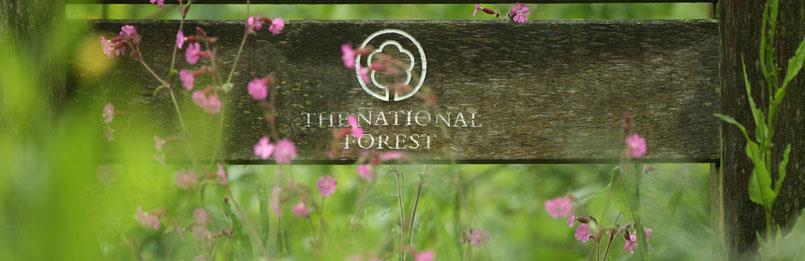 National Forest & Burton