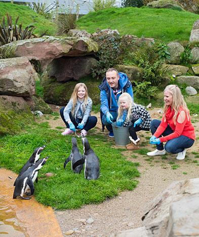 Get to feed the penguins on a Zoo Keeper experience at Peak Wildlife Park