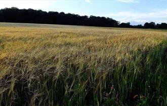 Brankley Pasture, Photo by Tim Wayne