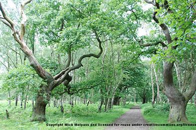 Brocton Coppice at Cannock Chase, Staffordshire. Copyright Mick Malpass.