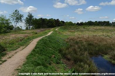 Castle Ring at Cannock Chase, Staffordshire. Copyright Colin Park.