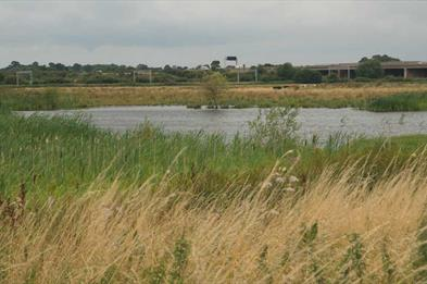 Doxey Marsh, photo by D Wright