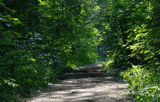 Hem Heath Woods, photo by Peter Thomas