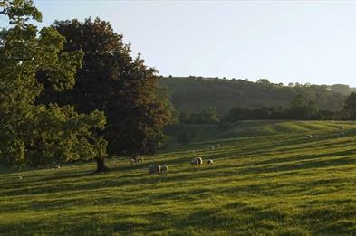 National Trust Ilam Park