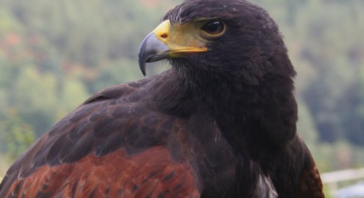 Visit the Eagles at Kingsley Bird Centre