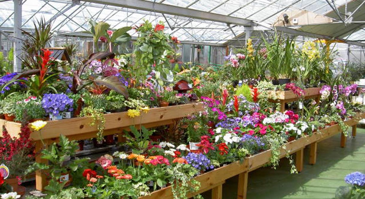 Plants for sale at Lealans Garden Centre