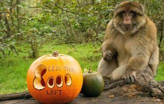 Halloween at Trentham Monkey Forest