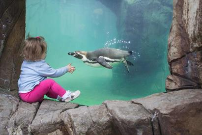 Watching the penguins fly underwater