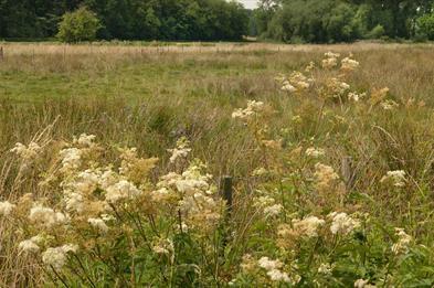 Pasturefield, photo by David Wain