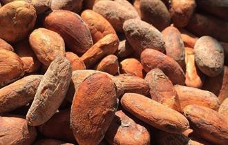 Seed Chocolate