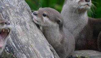 Entertaining Otter Feed at WWT Wetland Centre