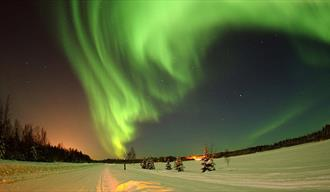 Aurora Night, image of the Northern Lights above a frosty landscape