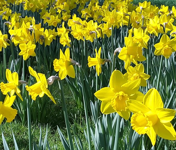 Thumbnail for Top 10 places to see spring flowers