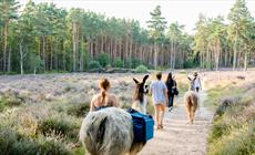 Thumbnail for Llama Trekking at The Merry Harriers