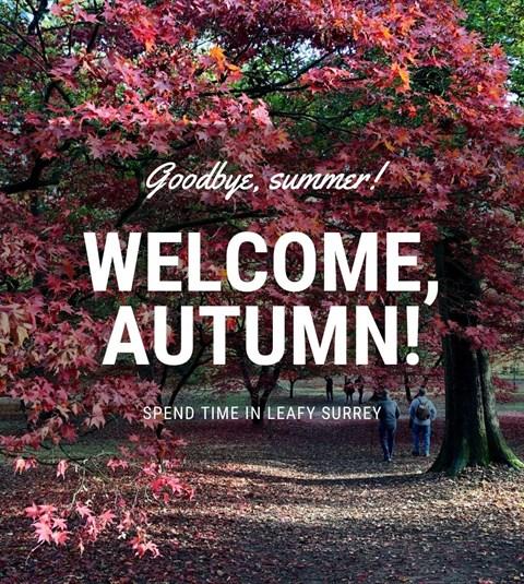 Thumbnail for Autumn Highlights