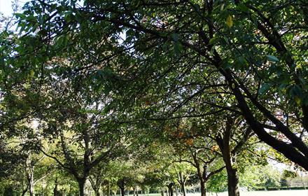 Ashford Fordbridge Park
