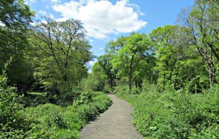 Holmwood Common
