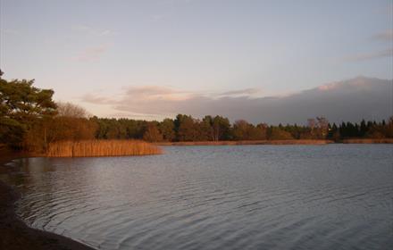 Frensham Little Pond - National Trust