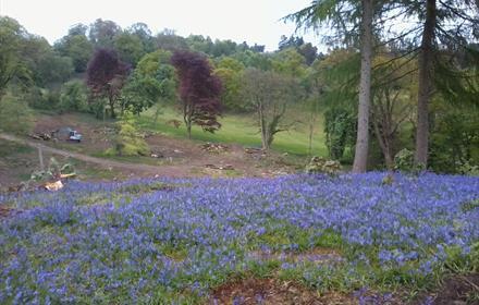Chart Park, near Dorking Surrey