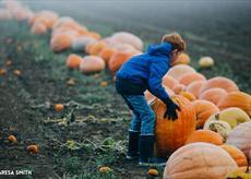 Secretts Pumpkin Week