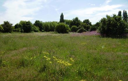 Shortwood Common