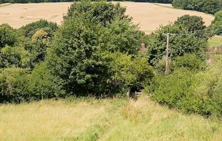 Hambledon Village and Speltham Down