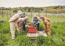 Bee-Keeping Demonstration