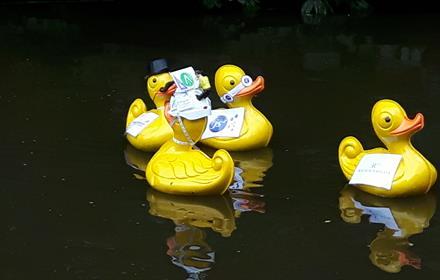 Surrey Care Trust Duck Race
