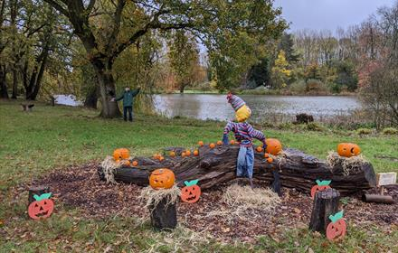 Help the scarecrow find the pumpkins