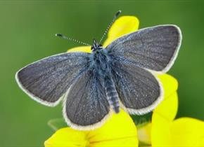 The Big Butterfly Count at Albury Vineyard