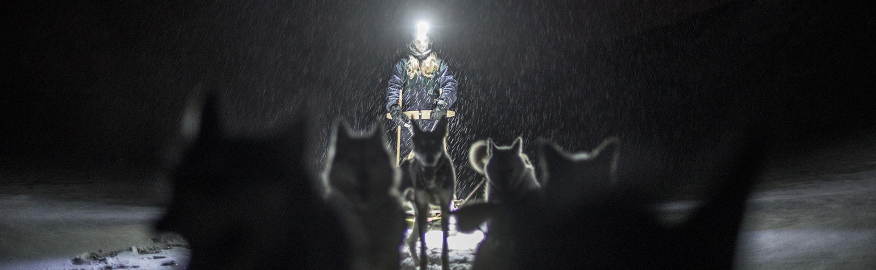 Dogs of Svalbard