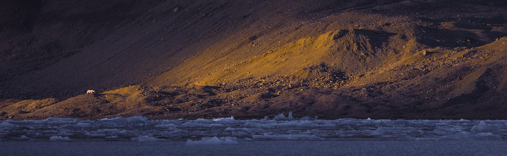 Polar bear - The King of the Arctic