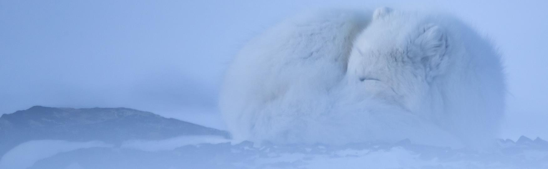 About Svalbard