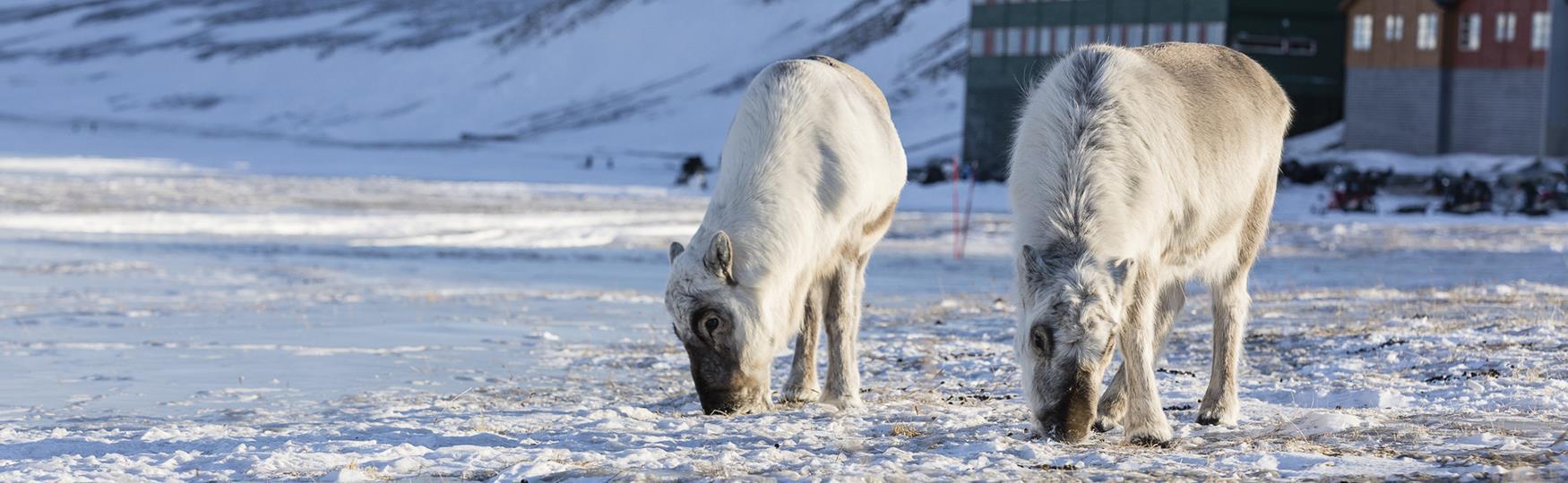 Svalbard med god samvittighet!