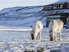 Thumbnail for Opplev Svalbard med god samvittighet!
