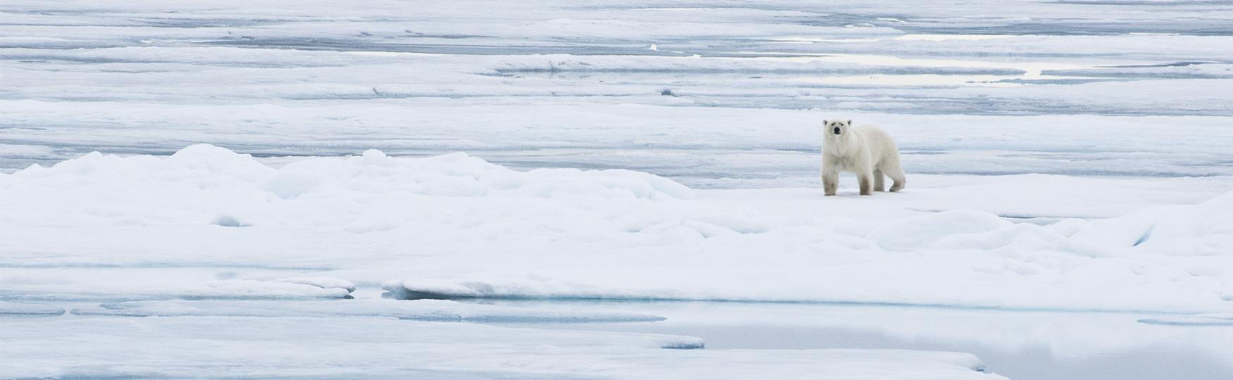 Stay safe in Svalbard