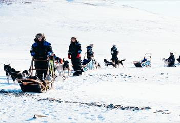 Gruppe med hundesleder