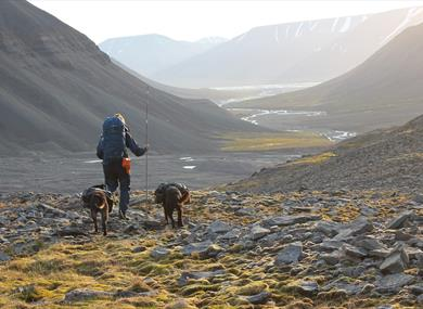 A person hiking with two dogs