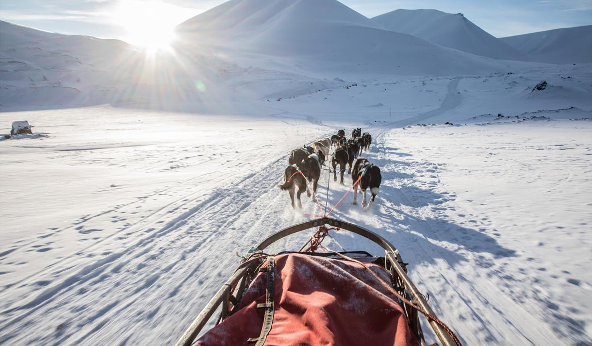 A dog sled with sled dogs running in front