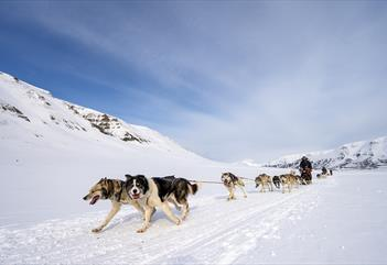 Dogs running in front of and pulling a sled with guests on it