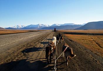 Hunder som løper langs en vei
