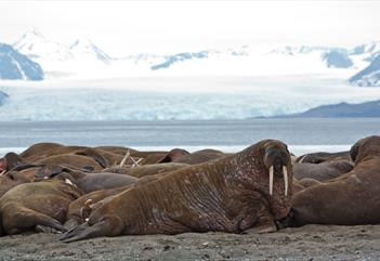 Walrus safari - Two tons of happiness - Better Moments